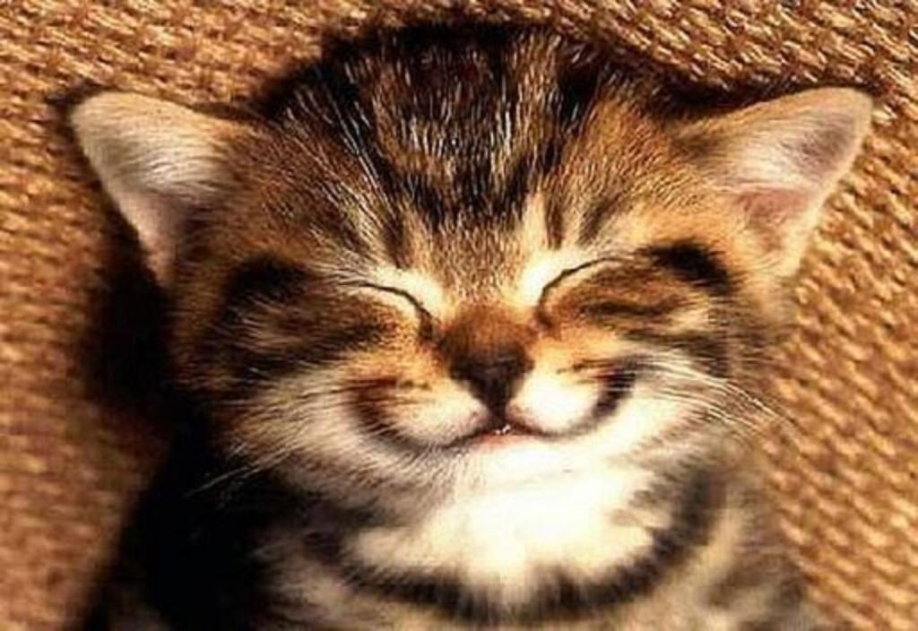 smile-cat.jpg