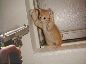 pistol_cat.png